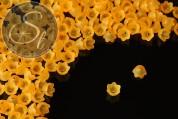 20 pcs. light orange acrylic-flowers frosted 10mm-20